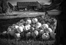 Kateryna Turko takes out seeds from pumpkins. Svalovychy Village,  Liubeshiv Raion, Volyn Oblast. 2016, photography
