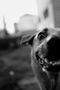 Анна Войтенко, Із серії Мертві пси, 2020, фотографія
