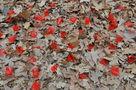 Передчасна осінь, із серії Кримгума, 2010, цифровий друк