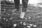 Плоть, яка пожирає, 2013, фотографія, ручний друк, 47х57