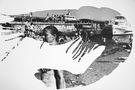 Креветка, 2013, фотографія, ручний друк, 50х60